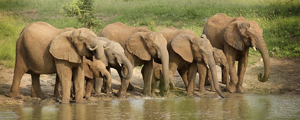 Idube Elephants from Hide