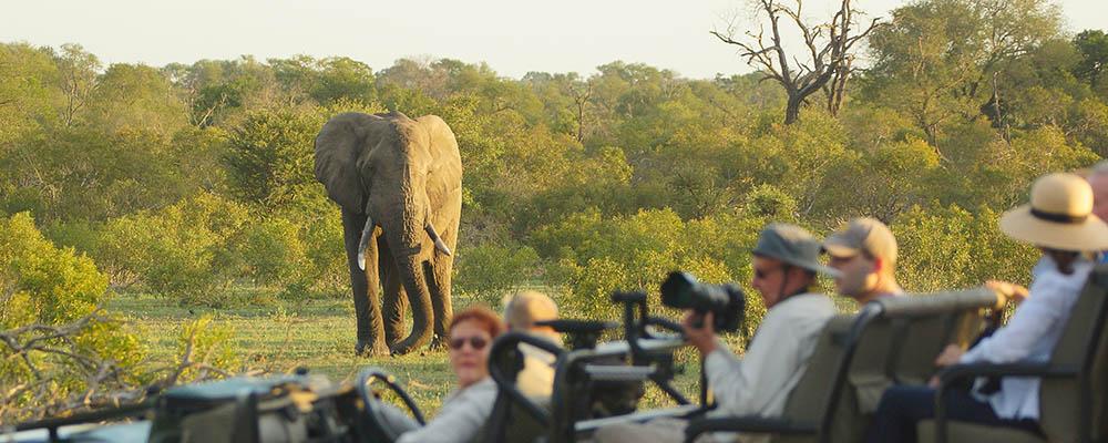 Vehicle with elephant behind